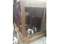 3 dog kennel and runs