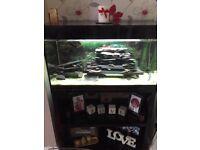 Askoll fish tank- Italian aquarium