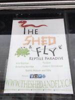 The Shed and Fly Reptile Paradise!