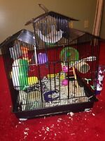 Free fancy mouse with cage