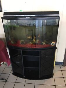 Fish tank with ciclids