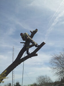 Tree Removal & Log Milling Kitchener / Waterloo Kitchener Area image 2