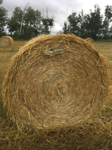 Greenfeed Oats 5' X 5' Round Bales