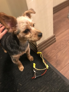 FOUND PUPPY IN WINDERMERE SOUTH