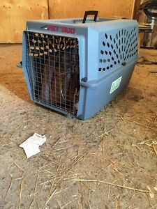 small dog cat puppy kennel