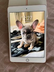 iPad Mini 5th 64GB Wifi + Cellular BOXED