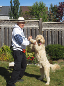 Reliable Friendly Neighbor at Home Dog Boarding 16th Ave/McCowan