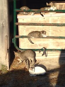 Adorable barn kittens looking for new homes