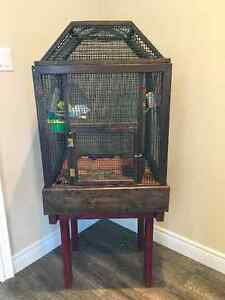 2 beautiful budgies with cage