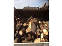 Free logs / fire wood