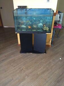 Grosse aquarium