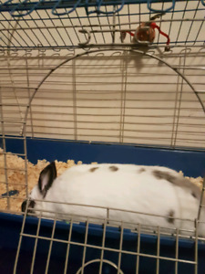 Rabbit  for good home