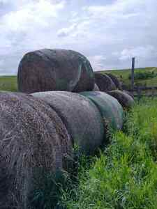 Aged Hay for Sale