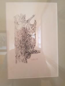 Screeh owl - T.M. Shortt