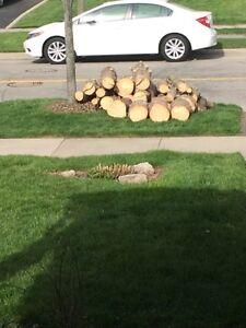 Free - fire wood