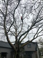 Southern Ontario Tree Specialists (289)700-9364 or www.sots.ca