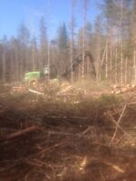 Forestry Job