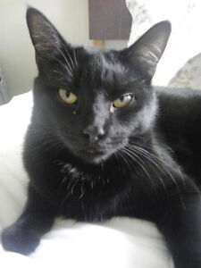 Shadow the Cat Lost in Chatham