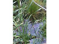 WANTED:pond fish to restock established large rural pond