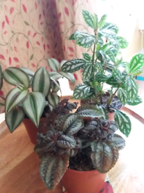 Plants for sale £6 each