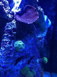 Buying / trading coral