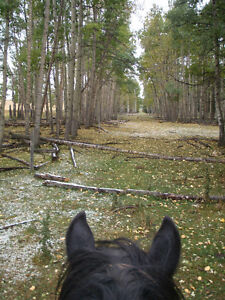 free horse lease/riding - 1 hour north of Calgary