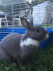 Rabbits for sale - includes cage