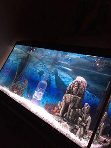 Aquarium 33gallon