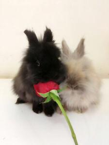 5 livres foin recommended by SPCA for rabbit
