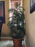 Artificial/fake house plant/ tree- good condition.