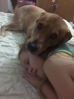 need a foster home for dog