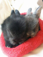 Sweetest Baby House Bunnies for sale!