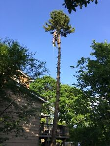 Tree REMOVAL-TREE Triming/Pruning>FALL SPECIAL...... Kitchener / Waterloo Kitchener Area image 4