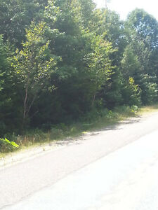 Wooded lot in Digby Co.