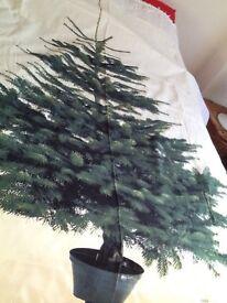 Wall mounted fabric advent Xmas tree