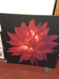 Large Red Flower Canvas Picture