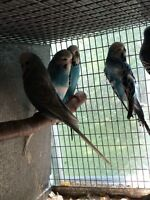 Aviary for Sale. Priced reduced on remaining birds+cages