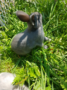 Baby male bunny