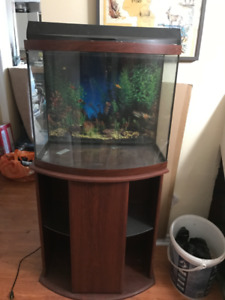 28 gallon bow fronted acquarium with filter and all equipment