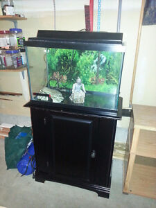 20 gallon fish tank with a black stand
