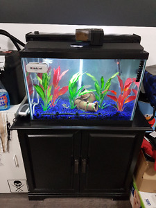 20 Gallon Tank with everything
