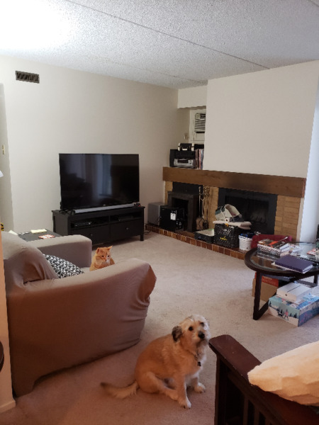 Beautiful pet friendly 2 bedroom apartment in Southdale ...
