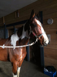 Looking for Outdoor Horse Board West End Ottawa