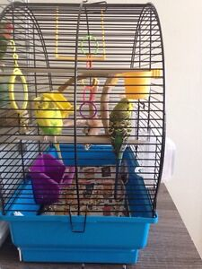 2 Budgies, cage & toys