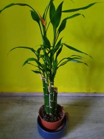 Bamboo flower