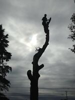 Tree Feller serving East and South ends of Ottawa