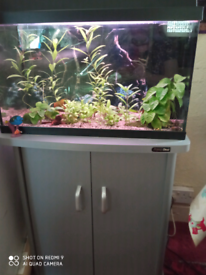 Planted tank set up