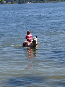 Horses for lease in Metchosin
