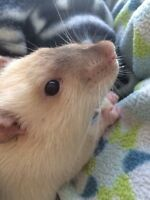 Small animal Pet sitter in dartmouth?