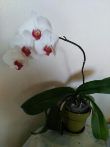 Healthy and beautiful decorative indoor/outdoor plants for sale